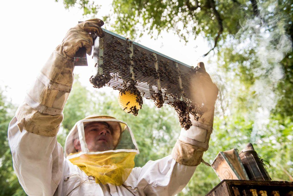 2018. Méhész április – Főszerepben a bioméhészek